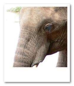 まつげの長さを実感するこの距離感でゾウを観察できる