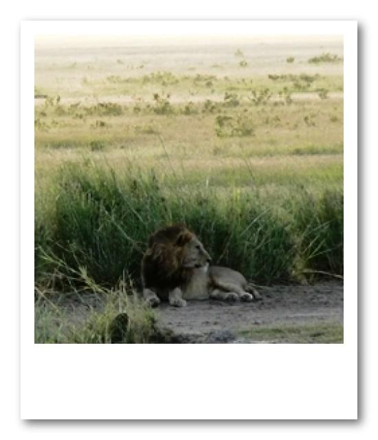 ライオン発見☆